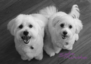My dogs Mini & Cooper have inspired me to better a better, kinder human - thank you puppies!