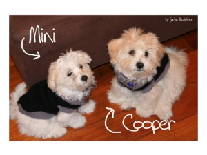 Mini and Cooper - two cute and naughty fluff balls
