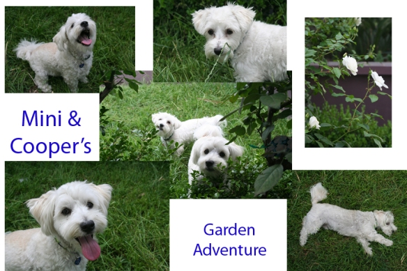 Mini and Cooper's Garden Adventure
