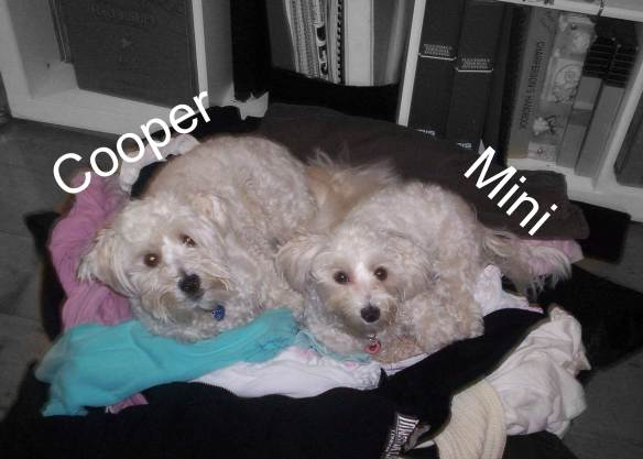 Mini and Cooper on clothes pile
