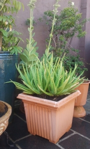 My Aloe Vera plant's new home. Finished results.