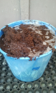 Place organic, compressed coconut fibre into a bucket of water