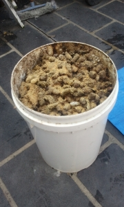 Dog poo treated / coated with EM Bokashi powder makes good nutrients in organic potting mixture for non edible plants