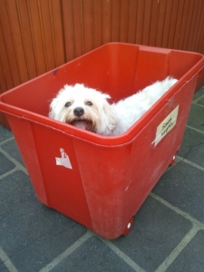 Mini trying out her new 'doggy bath' which I found on the side of the road