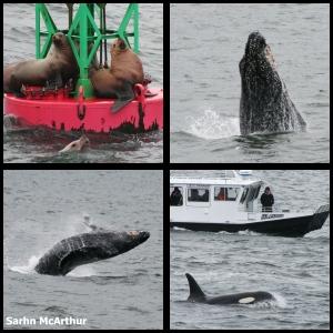 Alaska marine animals composition by Sarhn McArthur