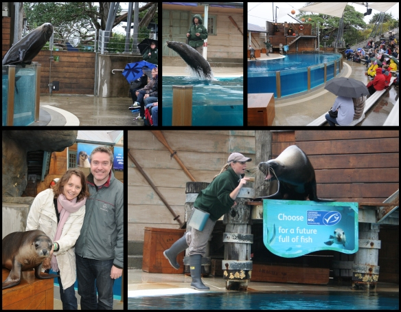 Taronga Zoo's Sea Lion Show and Fish 4 Life Program