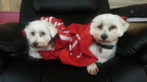 Mini and Cooper snugged up on a winter's day
