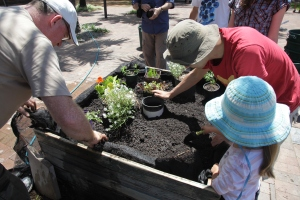 Green Square Growers installs edible garden patch at Tote Park, Zetland - Green Square