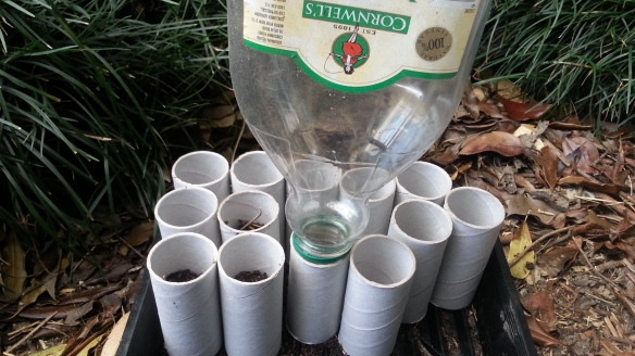 Solution for Filling Toilet Rolls with Soil, Ready for Seed Planting