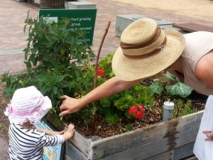 Some Green Square Growers at the Tote Library garden patch, in Zetland